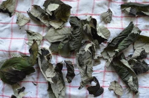 Fermentierte Brombeerblätter