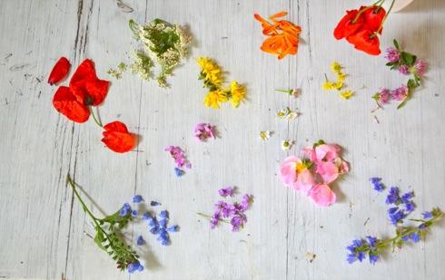 Sommerblueten-Wildkraeuter