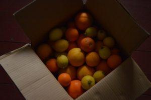 Ungespritzte Orangen